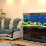 Curbstone sous l'aquarium à l'intérieur de la maison