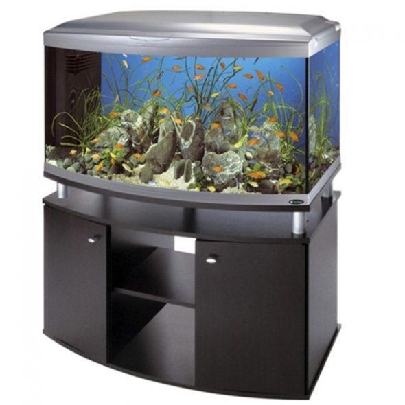 Curbstone sous la vue de l'aquarium