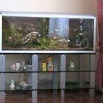 armoire en verre sous l'aquarium