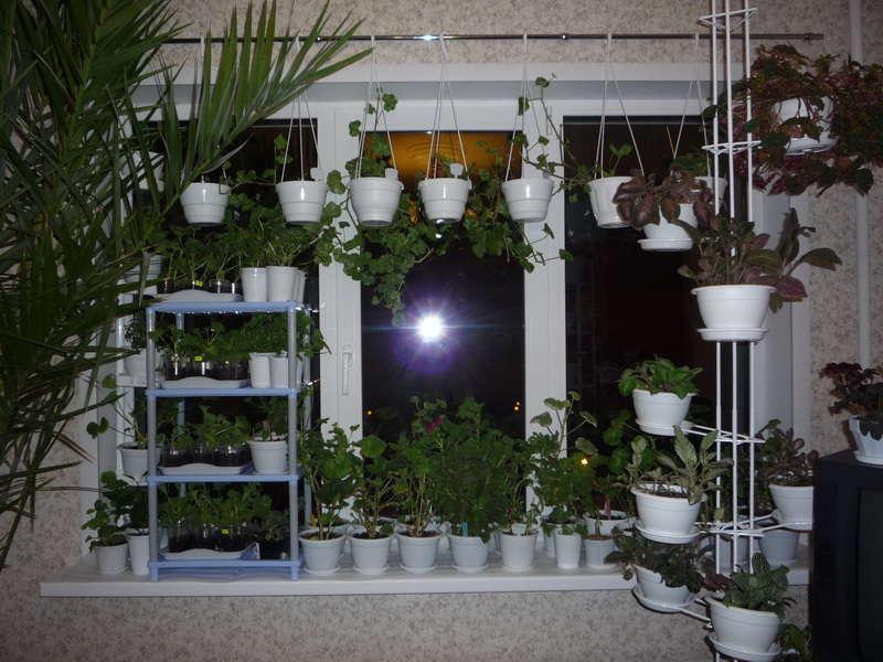 ikkunalaudalla kasvit