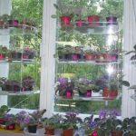 Kukkia ikkunalaudalla ylähyllyillä