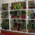 Kukkia ikkunalaudalla improvisoiduissa telineissä