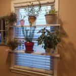 Ruukkukukkia ikkunoiden hyllyillä