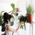 Riippuva hylly sisätilojen kasveille