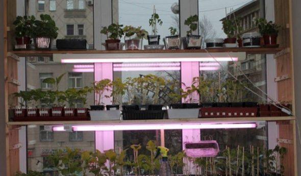Hyllyt kasvit ja taimet