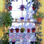 Hyllyt kukka-kasvien ikkunalaudalle