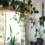 Meillä on sisätiloja kasveilla ja ripustimilla