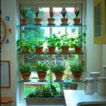Me sijoitamme paljon sisätilakasveja yhteen ikkunaan