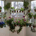 Chic kukkapuutarha ikkunalaudalla