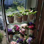 Lasihyllyt kukkia varten