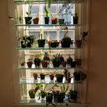 Teline kukkia varten lasihyllyillä