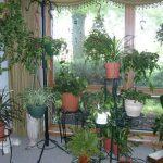 Talvipuutarha asunnossa