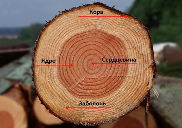 Propriétés du bois