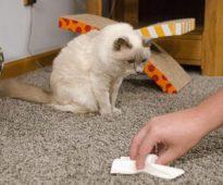 se débarrasser de l'odeur d'urine de chat sur un tapis