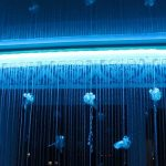 Photo de conception de rideau de rétroéclairage LED