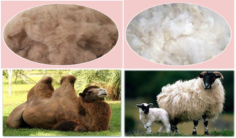 vulstoffen kameel en schapenwol